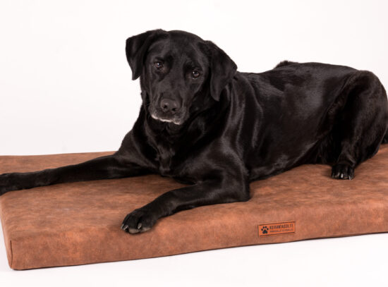 ruskea koiranpeti-5