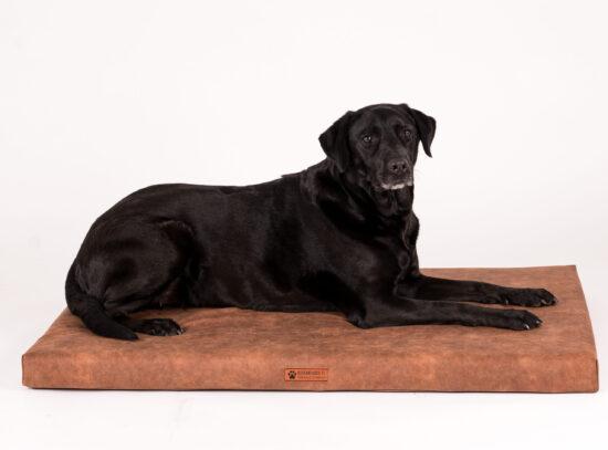 ruskea koiranpeti-6