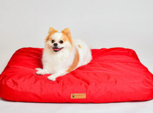Punainen Koiran peti pienelle ja suurelle koiralle